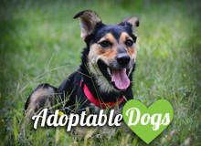 http://shsanimalshelter.com/wp-content/uploads/2016/03/adoptabledogs3.jpg