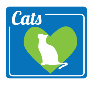 kittens for adoption maine