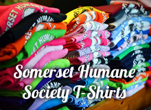 http://shsanimalshelter.com/wp-content/uploads/2016/03/t-shirts.jpg