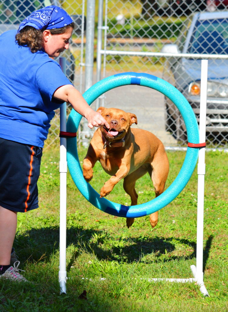 ADOPTED!~ Ginger