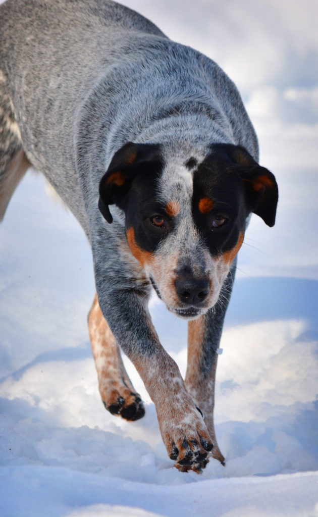 Adopted Dog Afraid Of Men