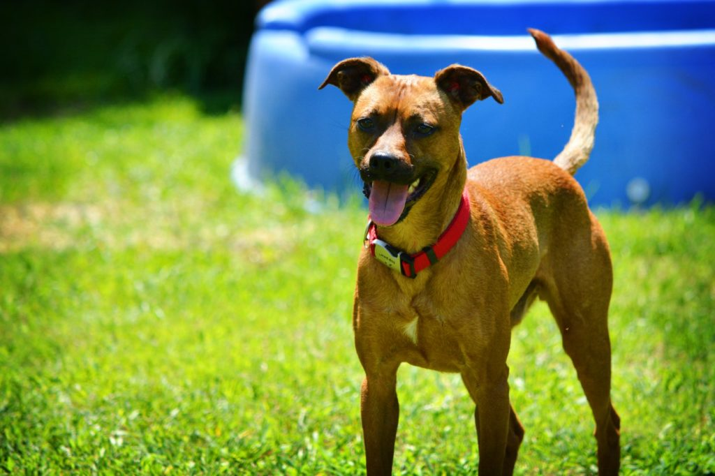 Adoptable Dogs - Somerset Humane Society Animal Shelter